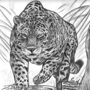 jaguar_80378.jpg