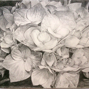 flores_81061.jpg