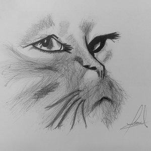 retrato de un felino