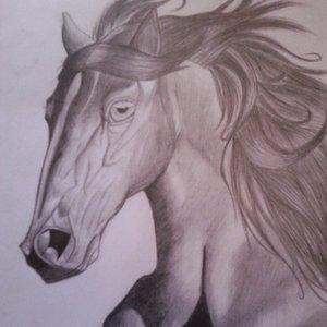 wild_horse_81230.jpg