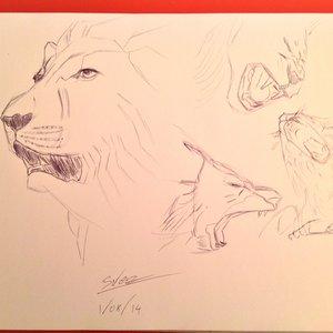 sketchs_leones_83065.jpg