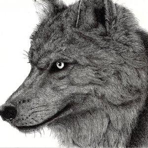 wolf_83366.jpg