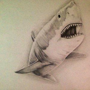 shark_72890.jpg