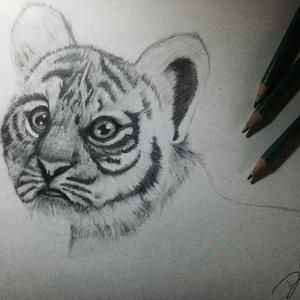 baby_tiger_72968.jpg