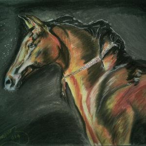 caballo_84081.jpg