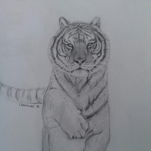 tigre_y_compania_85269.JPG