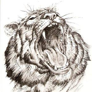 tigre_73308.jpg