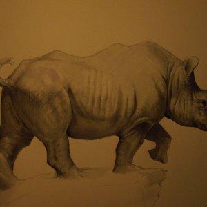 rinoceronte_86523.JPG