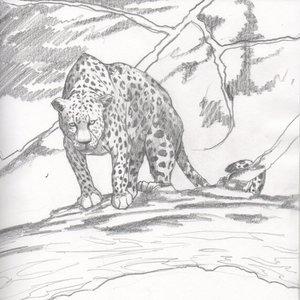 leopardo_86593.jpg
