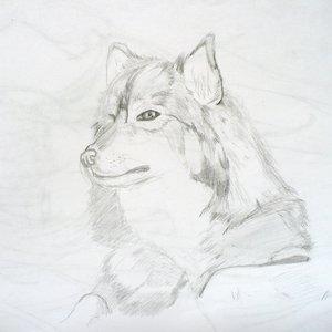 wolf_87224.jpg