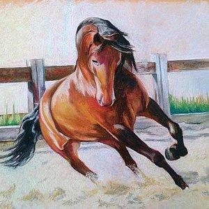 caballo_pre_73469.jpg