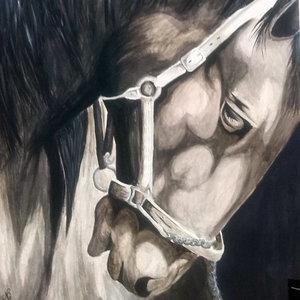 the_horse_73455.jpg
