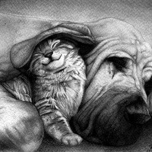 gato_y_perro_88118_0.jpg