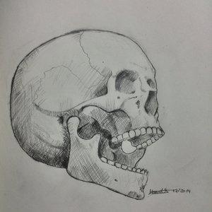 skull_89361.jpg
