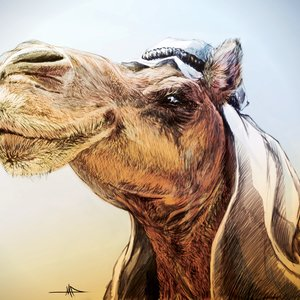 camello_emirati_73789.jpg
