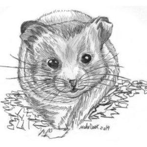 hamster_73815.jpg