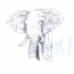 elefante_74061.jpg
