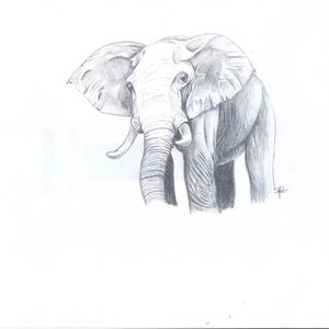 elefante_terminado_74163.jpg