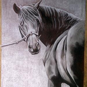 caballo_74337.jpg