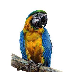 guacamayo_75376.jpg