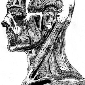 musculatura_humana_superior_76593.jpg