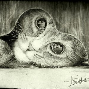 un gatoo!! :3