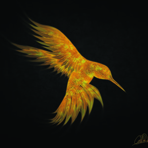 colibri_fuego3_219665.jpg