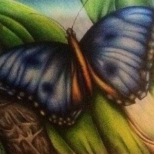butterfly_233822.jpg