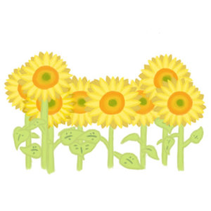Sunflowers_212303.jpg