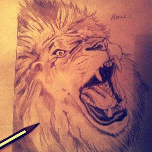 Lion_173_239258.jpg