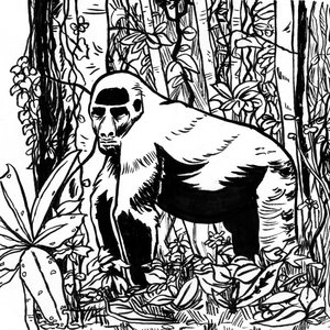 gorila2_242519.jpg