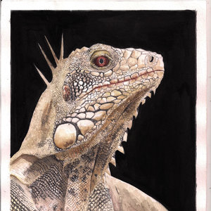 iguana_243948.jpg