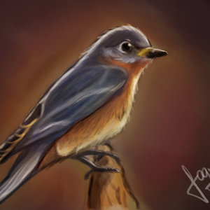 Bird_247244.jpg