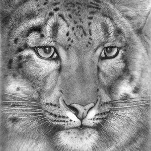 leopardo_247398.jpg