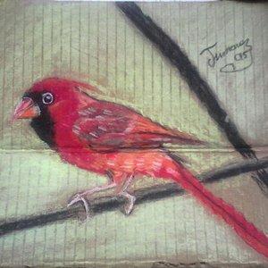 cardenal_248361.jpg