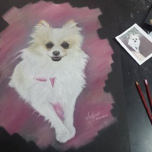 Pink pomerania