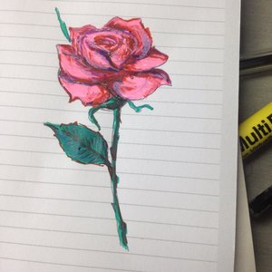 Rosa_216088.jpg