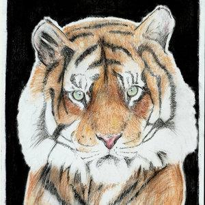 tigre2015fin_216433.jpg
