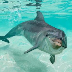 delfin_219165.jpg