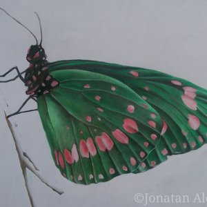 Preview__5___Butterfly_by_Jonatan_Alonzo_Art_265970.jpg