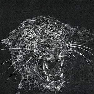 leopardo_s_269272.jpg