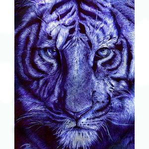 tigre2_269310.jpg