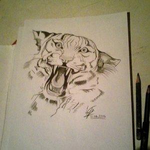 Tigre a lápiz
