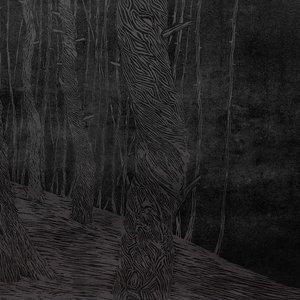 bosque_negroo_251787.jpg