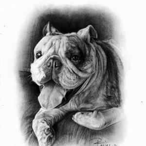 bulldog_encargo_276703.jpg