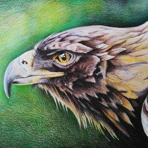 Águila real.