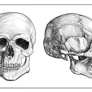 skull_284753.jpg