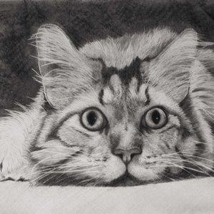 Cat_dibujo_gato__francisco_Javier_Cerezo__Montilla__CYErdoba__cuadros_pinturas_y_dibujos_287776.jpg