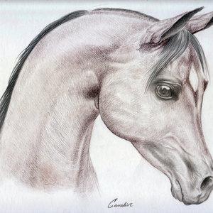 horse_cavalier_001_288193.jpg