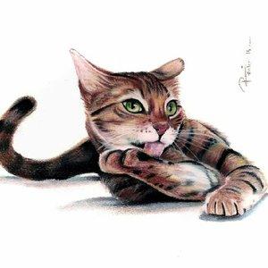 gato_tiza_pastel___copia_289161.jpg